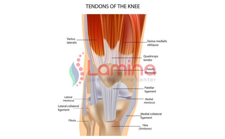 Cedera Lutut Penyebab dan Pencegahannya